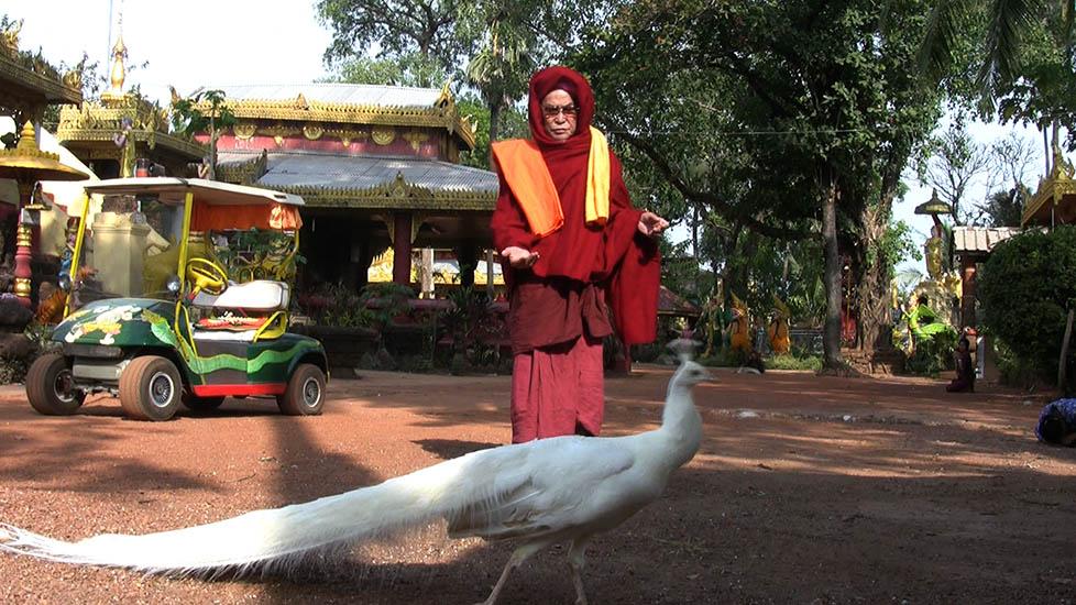 SayadawWithPeacock_978x550